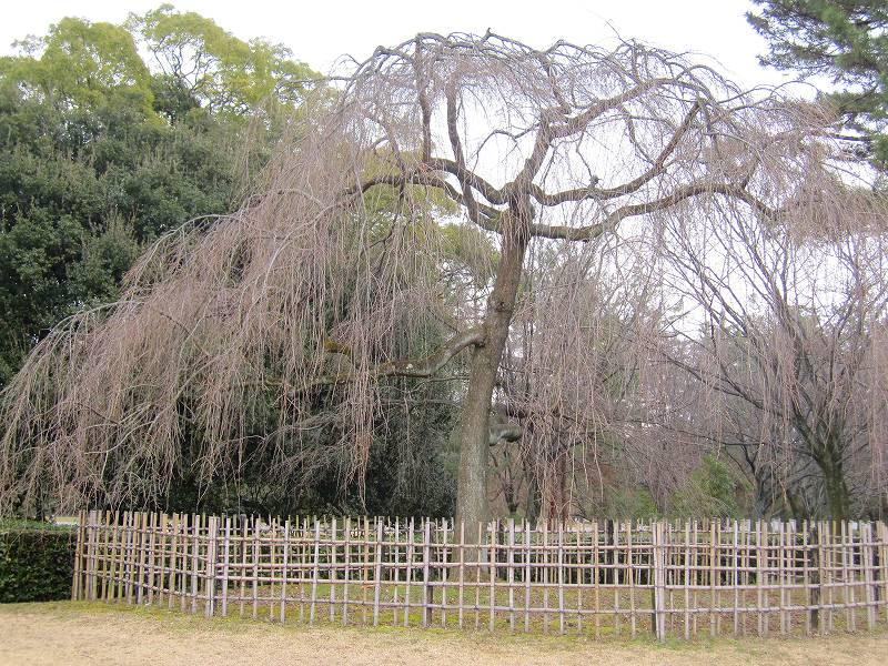 京都御所の梅模様(2011年)_e0237645_0232045.jpg