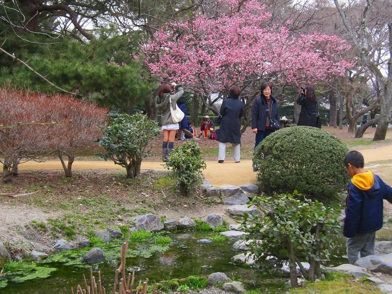 京都御所の梅模様(2011年)_e0237645_0251397.jpg
