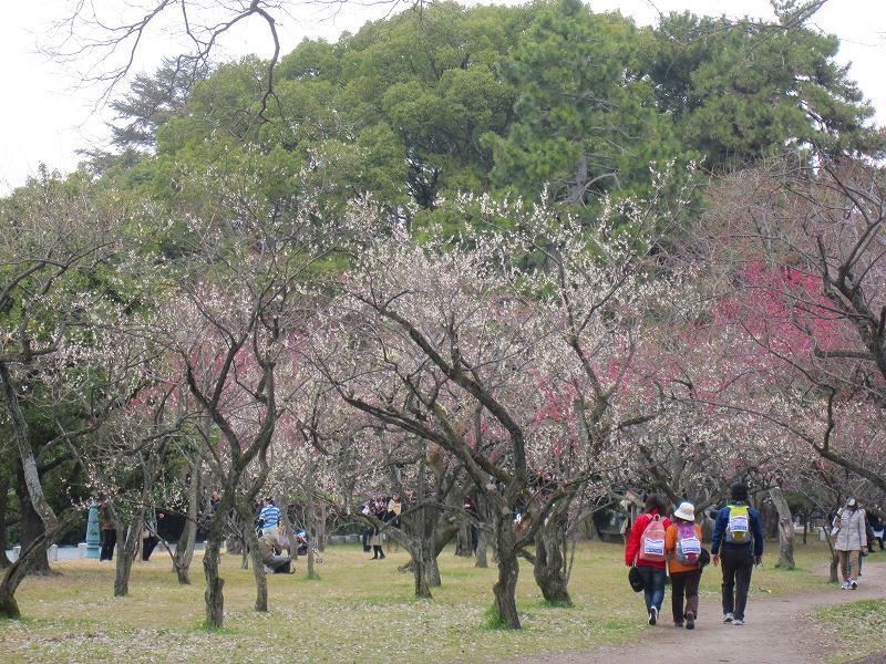 京都御所の梅模様(2011年)_e0237645_0264084.jpg