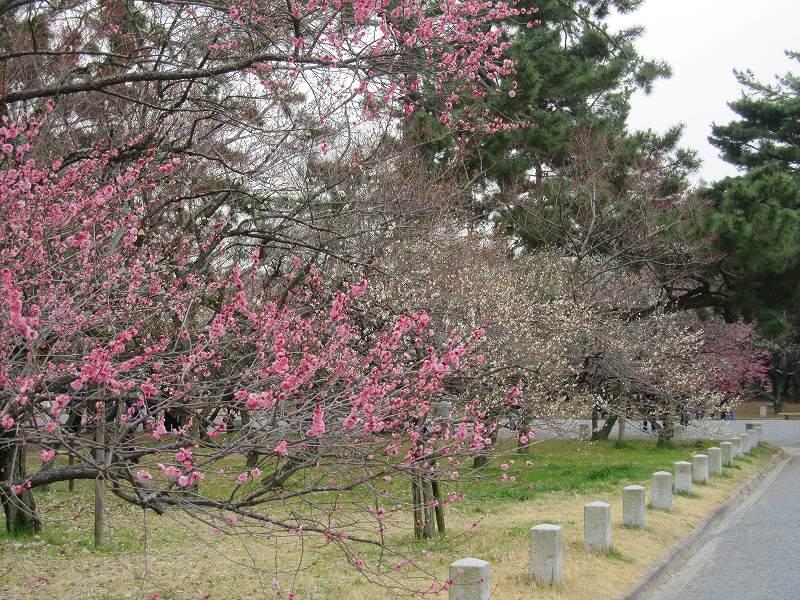 京都御所の梅模様(2011年)_e0237645_027515.jpg