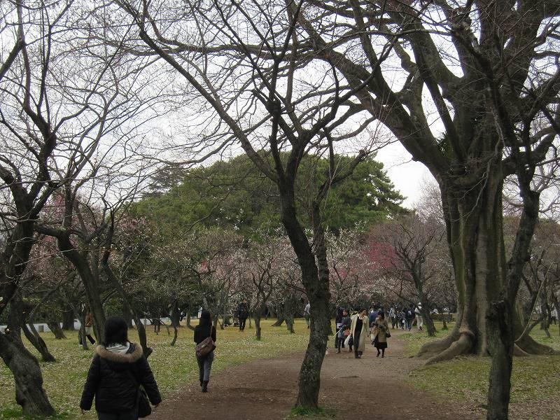 京都御所の梅模様(2011年)_e0237645_073394.jpg