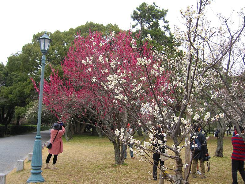 京都御所の梅模様(2011年)_e0237645_081983.jpg