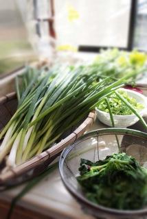 愛しい野菜たち_f0031259_22203390.jpg