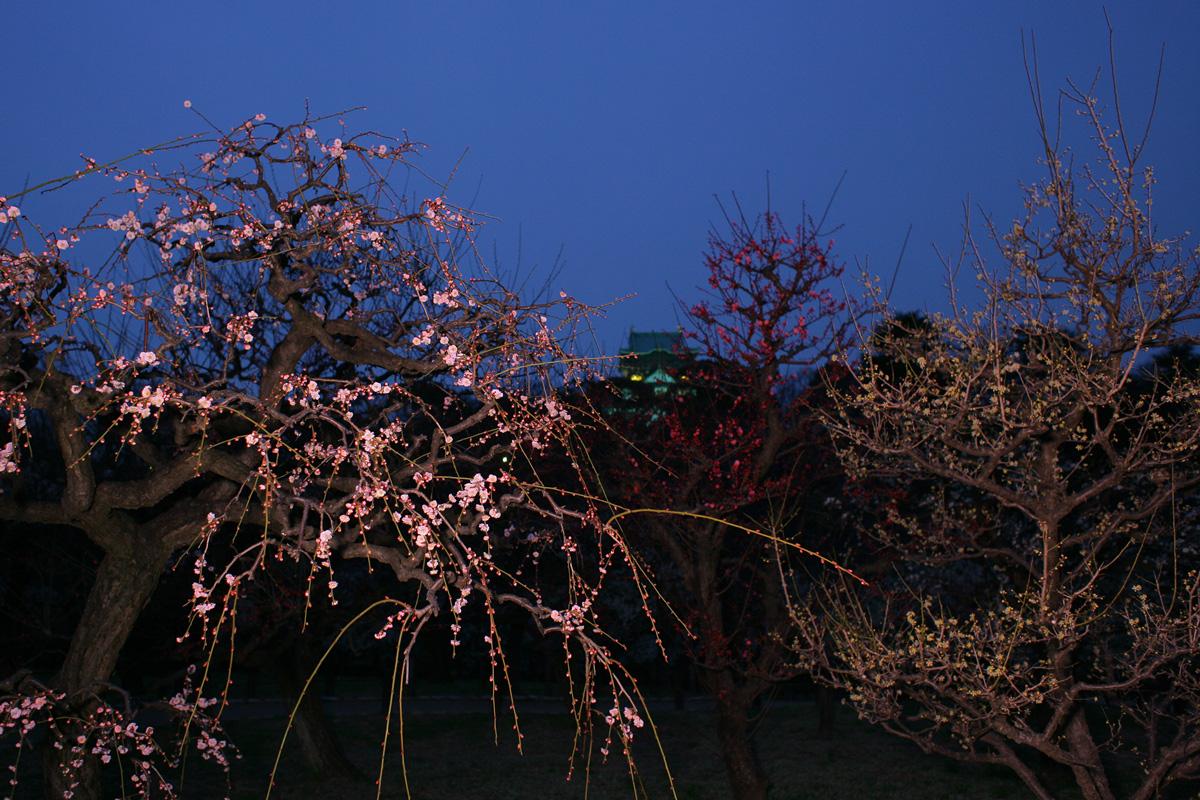 大阪城梅林_f0021869_22243195.jpg