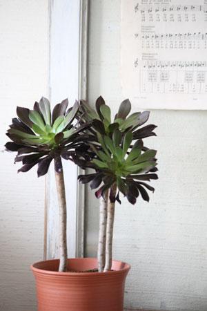 plants_c0118809_0121846.jpg