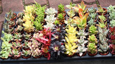 plants_c0118809_0124190.jpg
