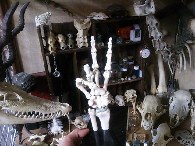 骨格模型手に入れました。【注:骨画】_d0014014_0574034.jpg