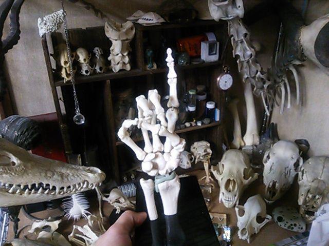 骨格模型手に入れました。【注:骨画】_d0014014_0581285.jpg