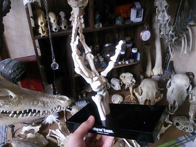 骨格模型手に入れました。【注:骨画】_d0014014_0584119.jpg