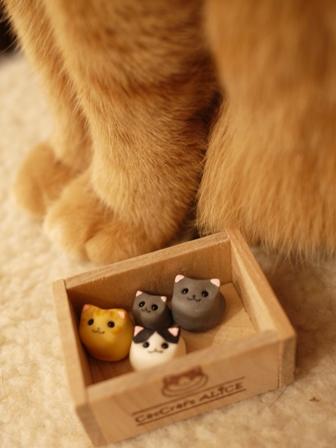 ちいさな猫家族猫 しぇる編。_a0143140_22255127.jpg