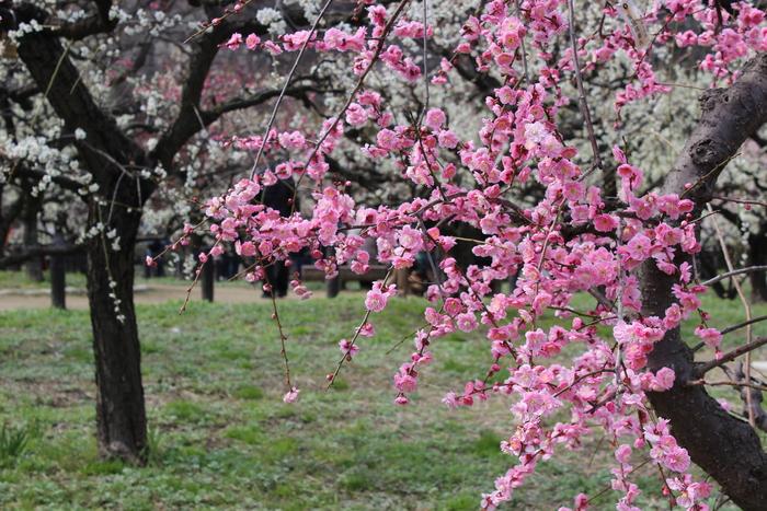 春の訪れ_e0232054_2323240.jpg