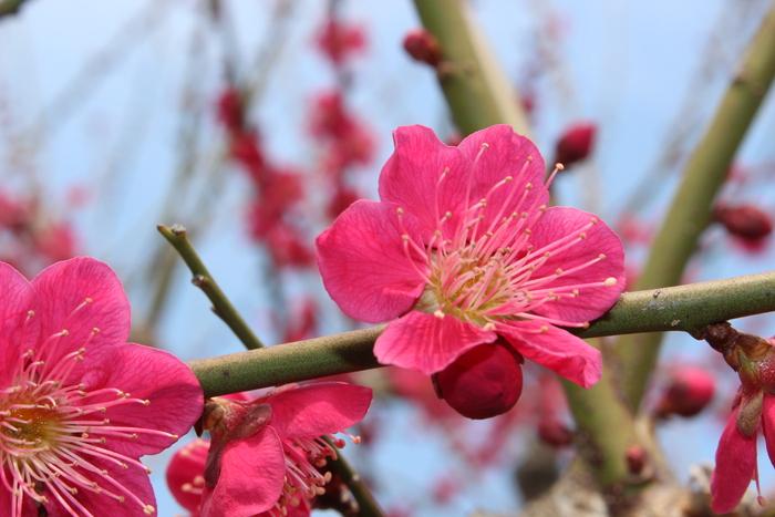 春の訪れ_e0232054_2332249.jpg