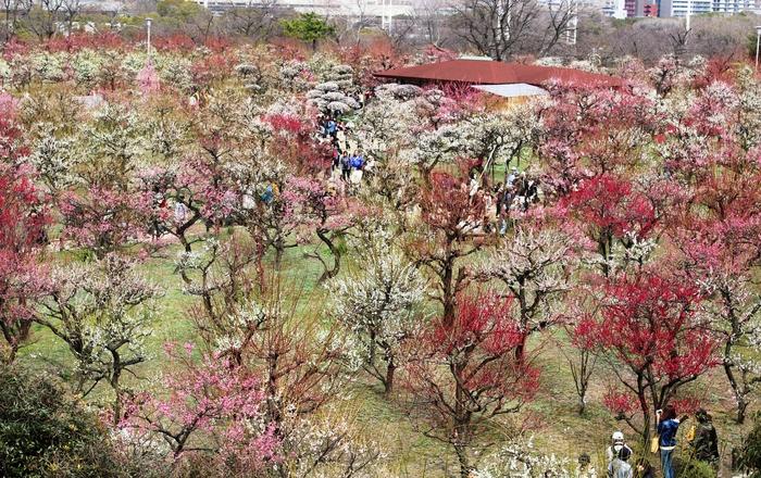 春の訪れ_e0232054_23354019.jpg