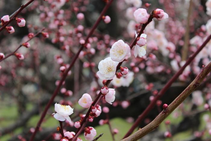 春の訪れ_e0232054_23403370.jpg