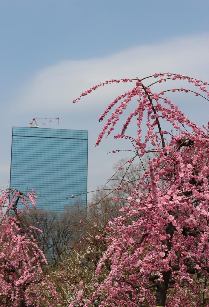春の訪れ_e0232054_23541996.jpg