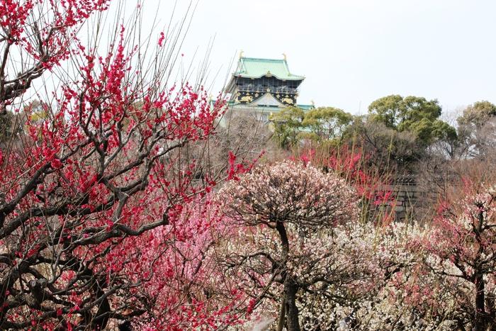 春の訪れ_e0232054_2374694.jpg