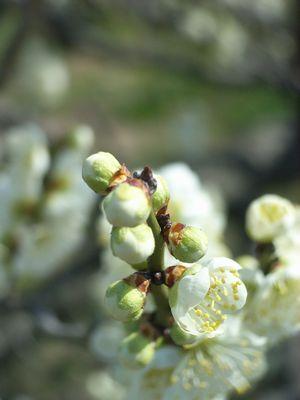 春を恨んだりはしない_c0013065_21584962.jpg