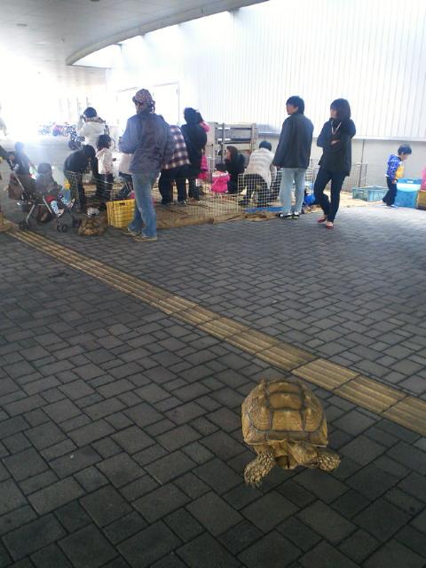 亀_c0001670_1202233.jpg