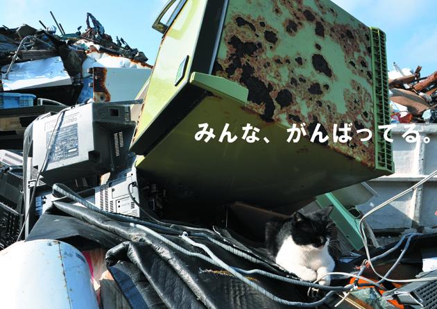 被災地写真展_e0171573_23422166.jpg
