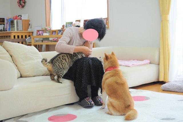 ようこそ佐倉へ!!_a0126590_22241754.jpg