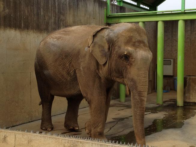 遊亀公園附属動物園。_a0188798_1245237.jpg