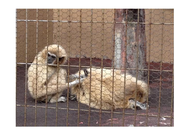 遊亀公園附属動物園。_a0188798_1252034.jpg