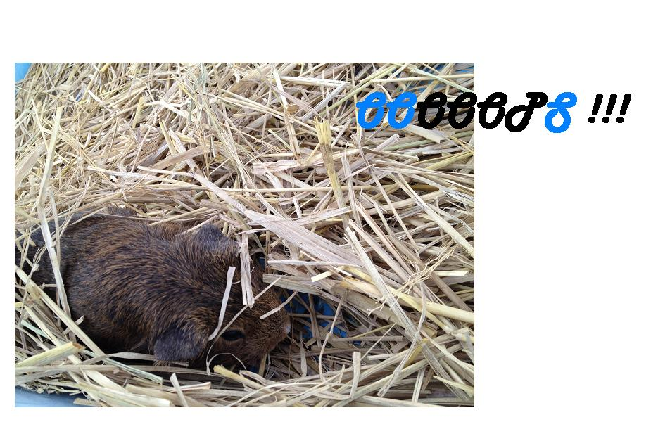 遊亀公園附属動物園。_a0188798_126985.jpg