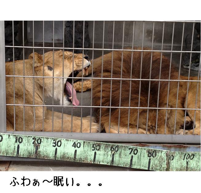 遊亀公園附属動物園。_a0188798_1272694.jpg