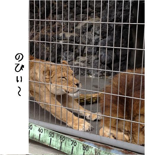 遊亀公園附属動物園。_a0188798_12813.jpg