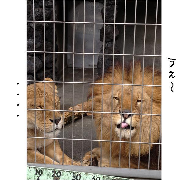 遊亀公園附属動物園。_a0188798_128284.jpg