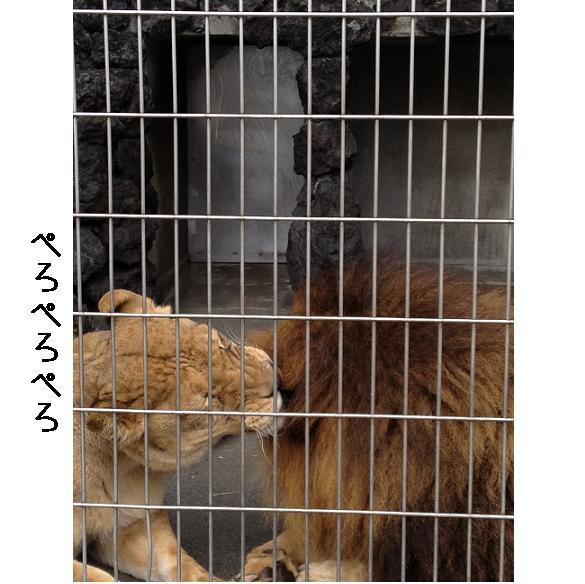 遊亀公園附属動物園。_a0188798_1284721.jpg