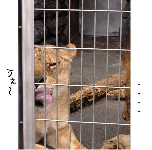 遊亀公園附属動物園。_a0188798_12904.jpg