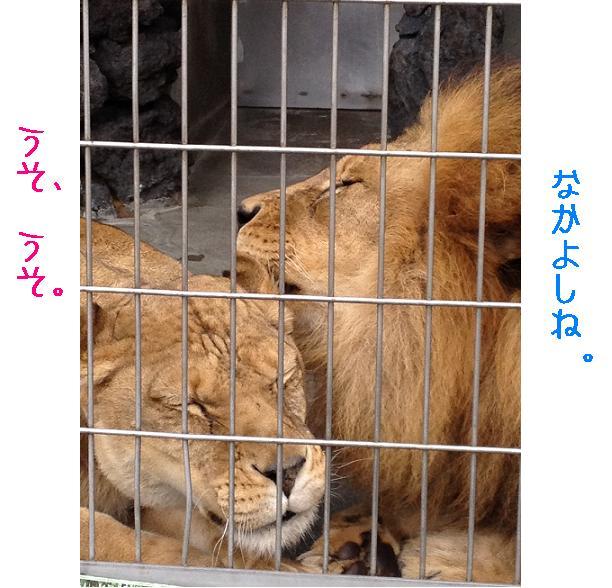 遊亀公園附属動物園。_a0188798_1291394.jpg