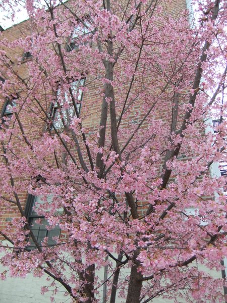 やっぱり春?_c0064534_13242136.jpg