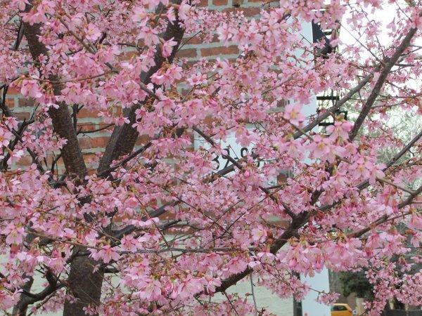 やっぱり春?_c0064534_13255258.jpg