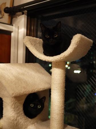 いいことあった猫 のぇるろった編。_a0143140_23212592.jpg