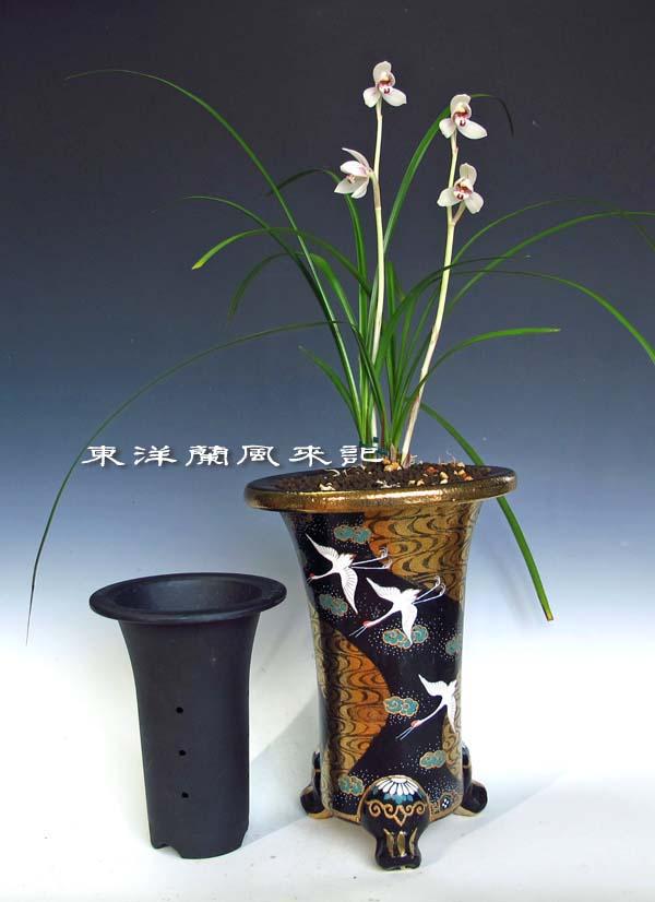 春蘭展示会飾り鉢                  No.1135_d0103457_20192480.jpg