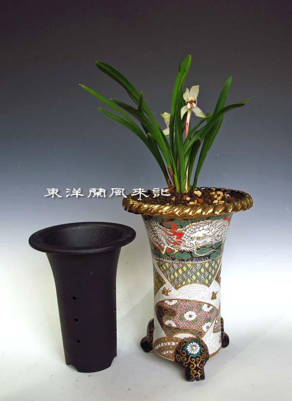 春蘭展示会飾り鉢                  No.1135_d0103457_20194799.jpg