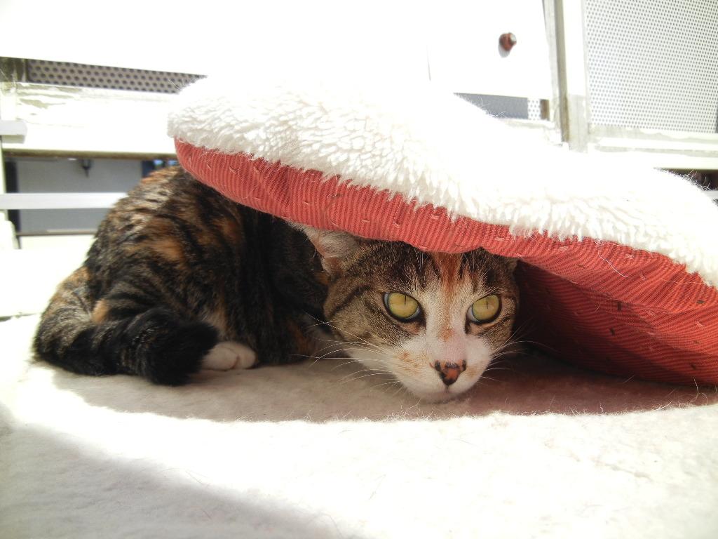 2012年3月12日(月)今日は猫の絵~!_f0060461_16475613.jpg