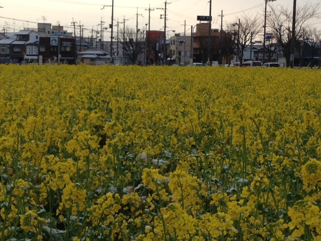 春??_f0201286_8502822.jpg