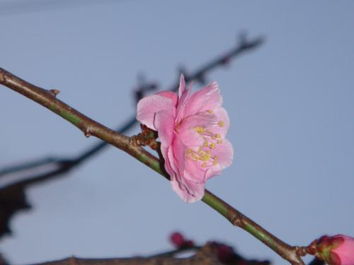 春??_f0201286_8511612.jpg