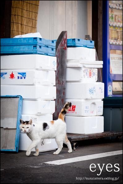 三毛猫遭遇率_f0100215_235524.jpg