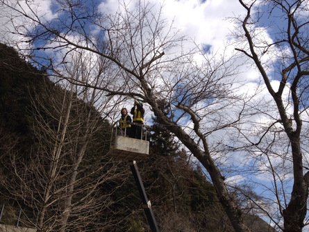 牧谷保育園 桜の木を再生(3/13)_b0226723_12473541.jpg