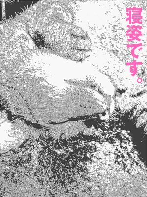 b0080632_14303299.jpg