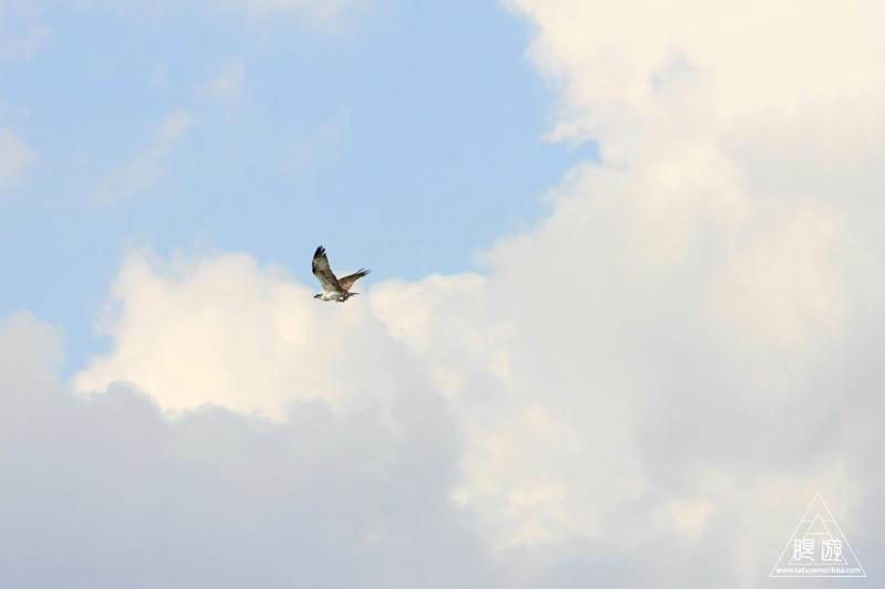 134 鳥ヶ崎 ~やさしい秋の光線~_c0211532_1112716.jpg