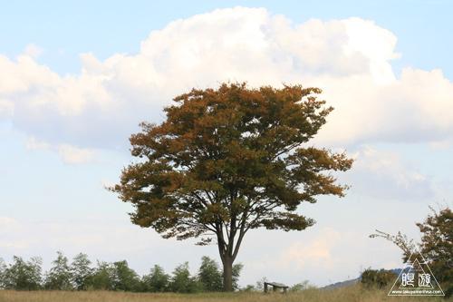 134 鳥ヶ崎 ~やさしい秋の光線~_c0211532_1121215.jpg