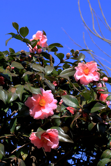 春を待つ楽しさ_a0107574_19423232.jpg