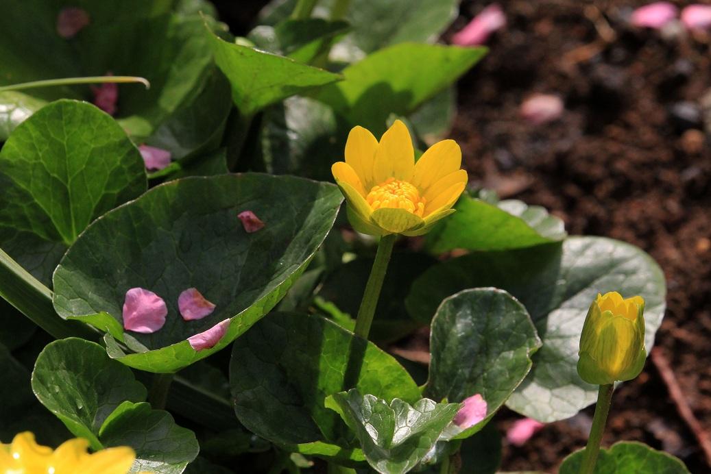 春を待つ楽しさ_a0107574_19503245.jpg