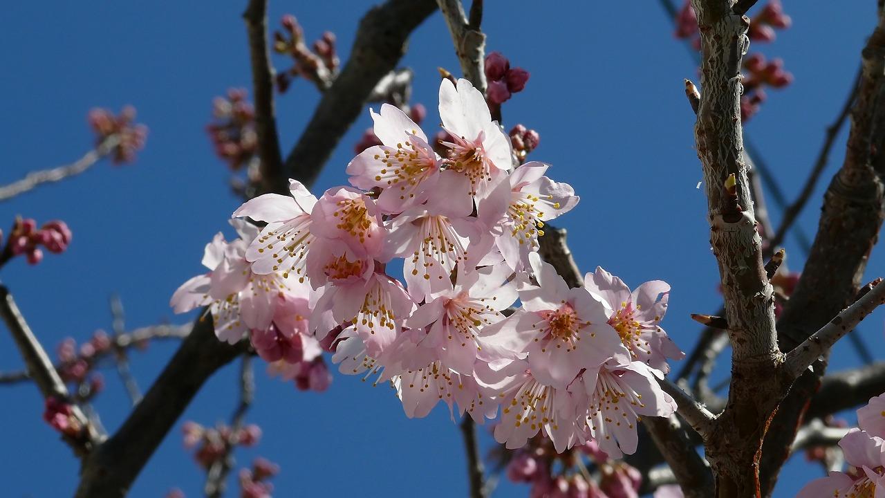 【 日記 3/13 】 ♪小春おばさん_a0185081_16231037.jpg
