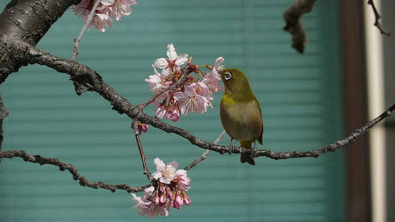 【 日記 3/13 】 ♪小春おばさん_a0185081_16235313.jpg